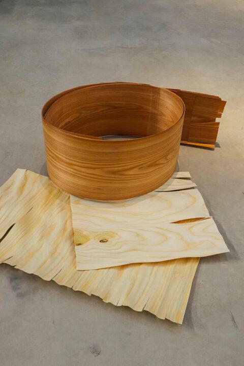 Unrolled veneer from an ailanthe glanduleux trunk, © Atelier LUMA