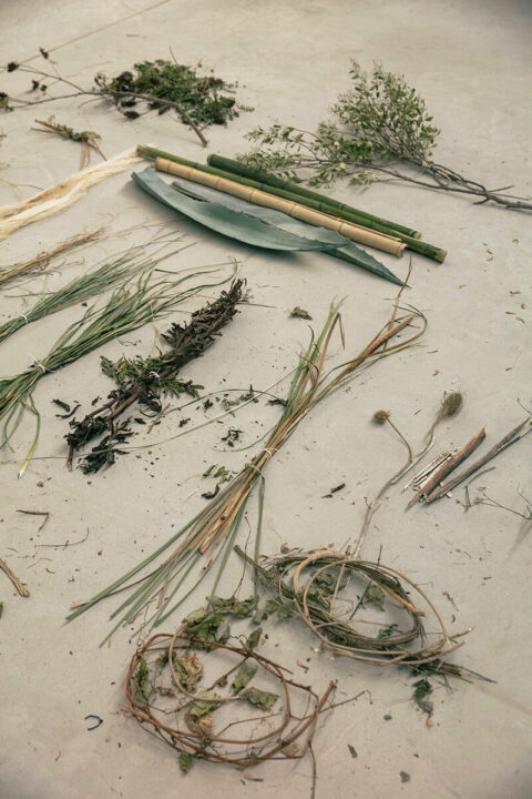 Invasive plants collected in the bioregion, used for testing, © Victor Picon