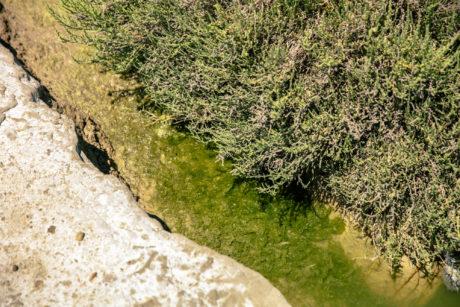 Algae Harvest, © Victor Picon