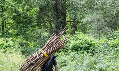 Uprooting Japanese knotweed, © Léo Dumont